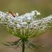flor e insecto by aleajactastur