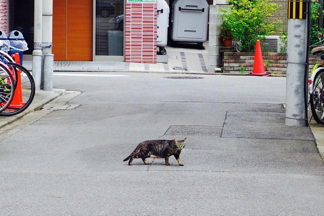 Today's Cat@2017-08-02