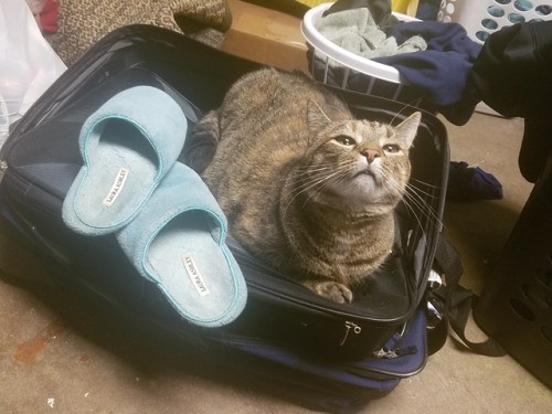 She likes to go on trips with her fluffy slippers - The Caturday