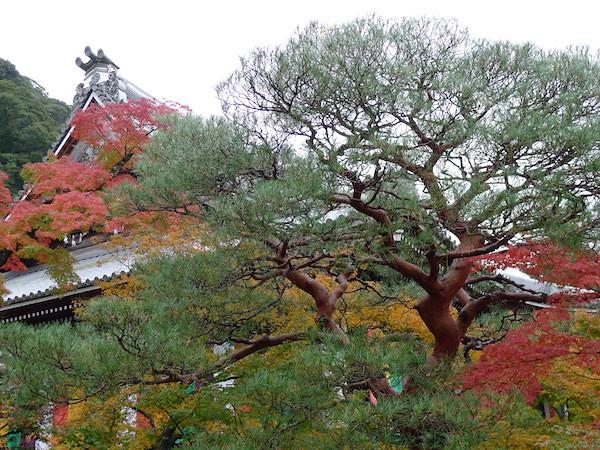 205-Kyoto