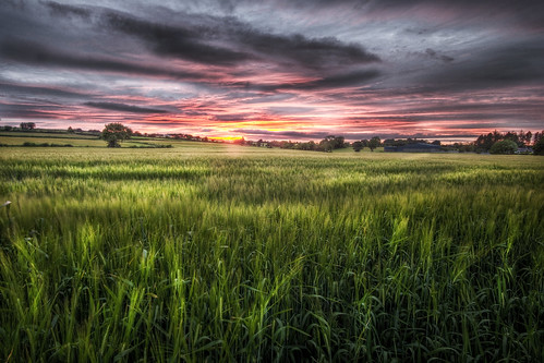 sunsetting over the corn field