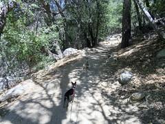 Heading up the Devil's Slide trail.