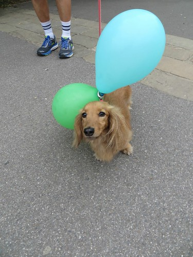 Junior Takeover 200th Event 15-07-2017 pooch