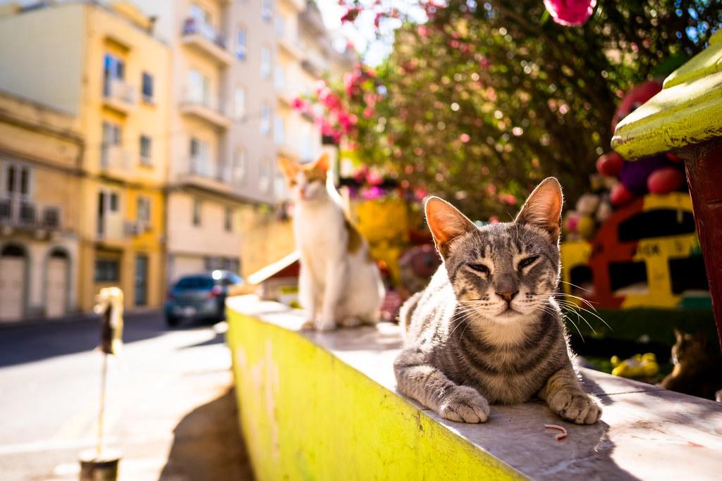 thrivers on islands #101 (Cat Village, St. Julians, Malta)