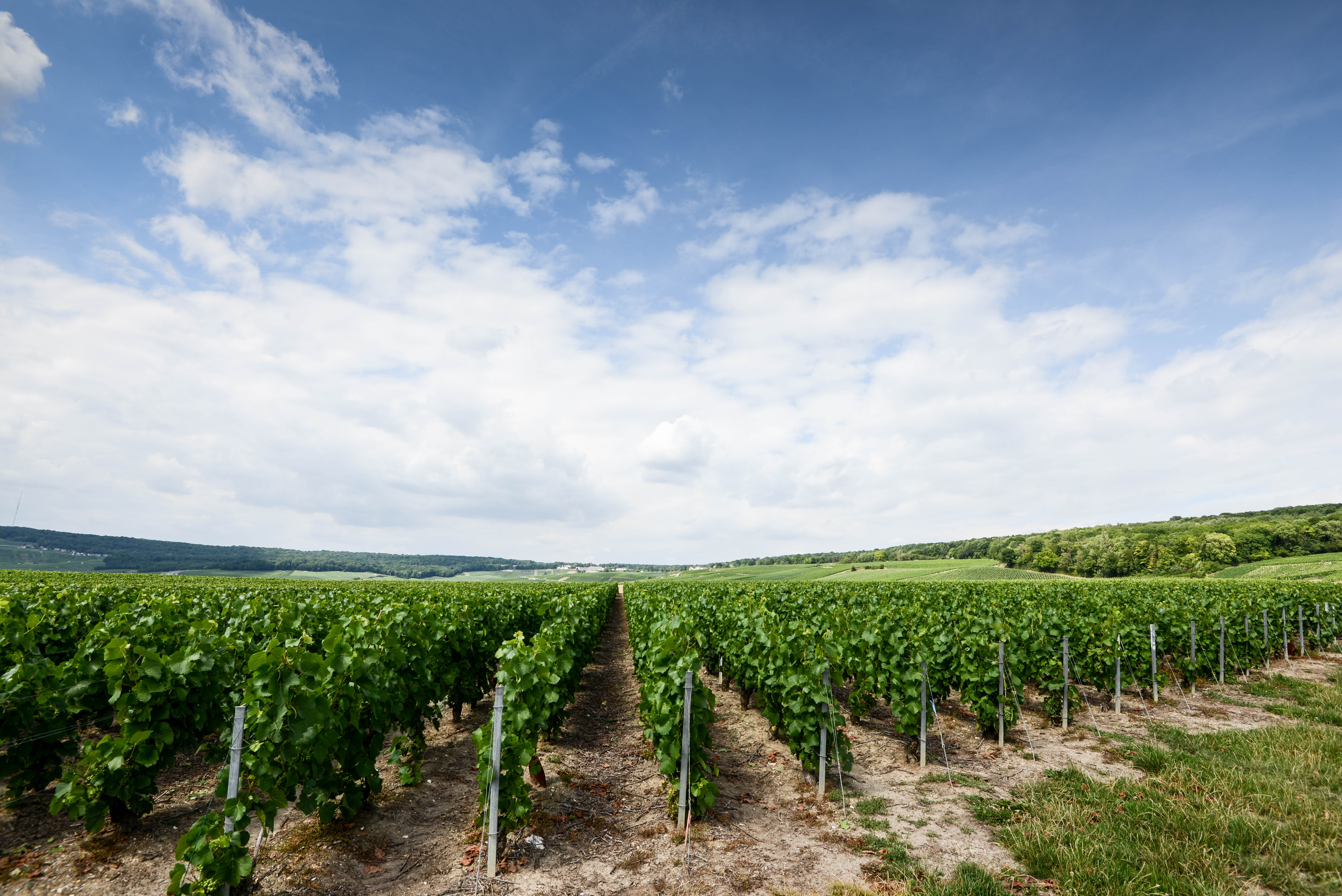 Experience the romantic Champagne region of France