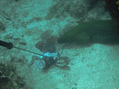 Eel Taking Lion Fish Bait (7)