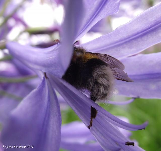 Beautiful Bug Butt Thursday, Fujifilm FinePix S1600