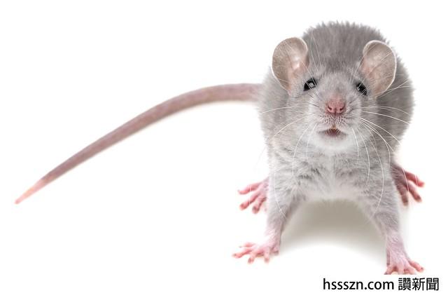 a cute little mouse