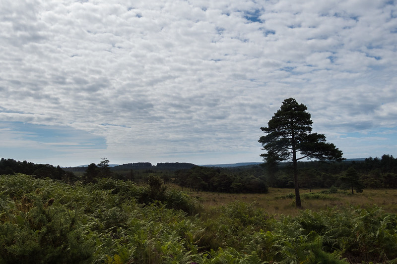 Walking in Wareham Forest