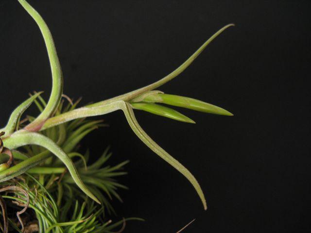 Autres plantes chez Cloo 35839045236_f6afeab797_o
