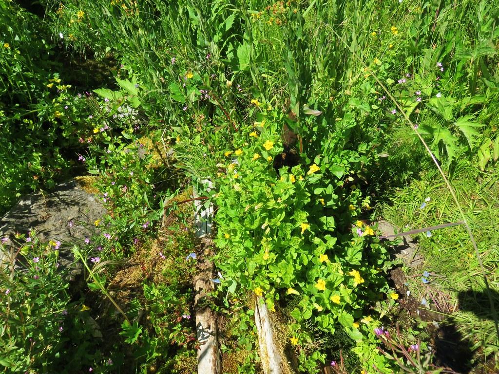 Spring in Grasshopper Meadow