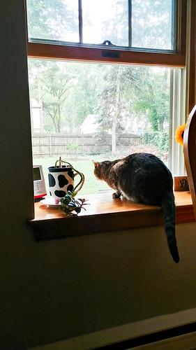 Brave cat bird-watcher