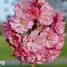 Spring Blossom by pallab seth