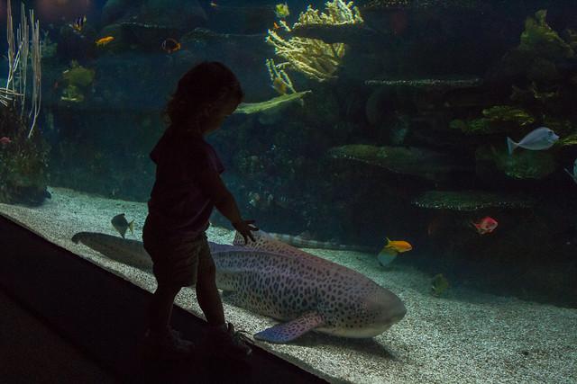 tropics aquarium