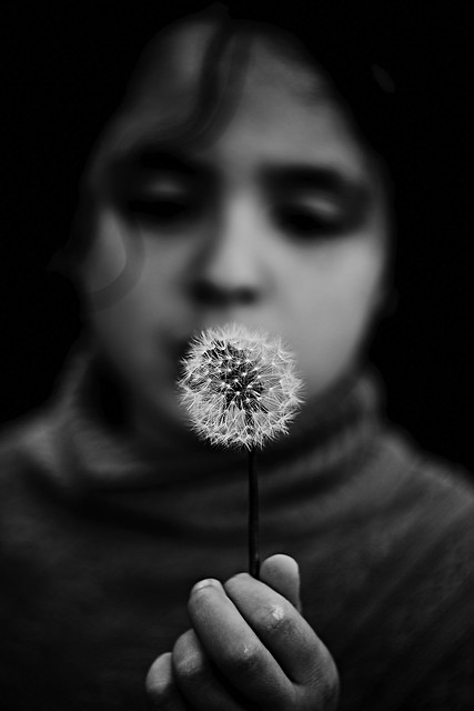 The girl and the dandelion
