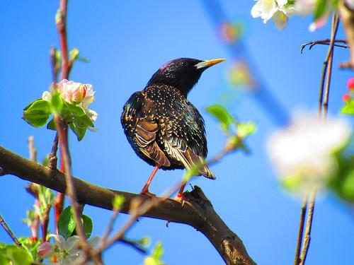 Bird on a flowering tree branch. Photographer Joann Kraft