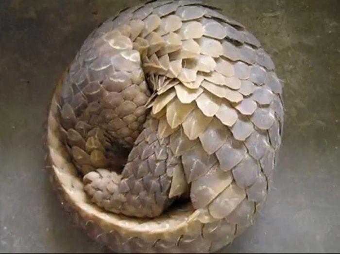 59c3cae6feeded7e60ebea5731e96e4b--fibonacci-in-nature-fibonacci-code