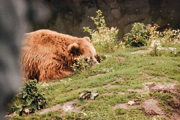 Im Zoo (7)