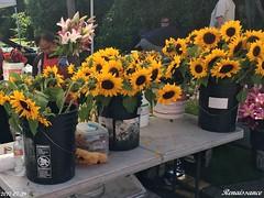 Edmonds summer farmers market