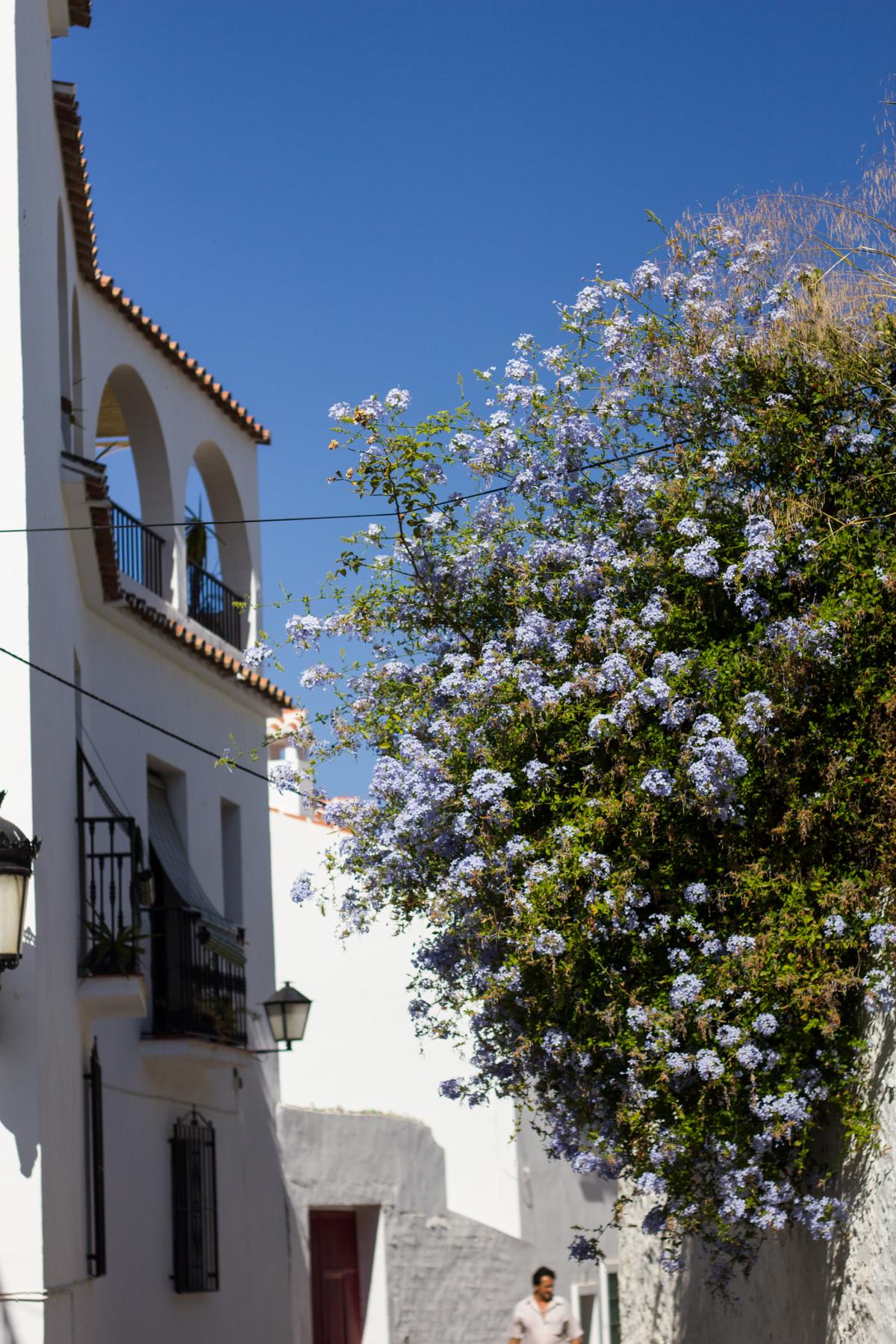 Flowers in Competa, Spain