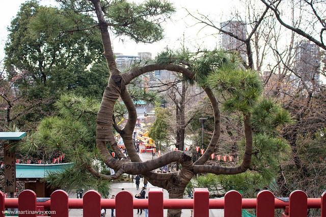 Tsuki no Matsu at Kiyomizu Kannon-do, Ueno Park