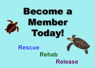 Become a member today icon 2 copy