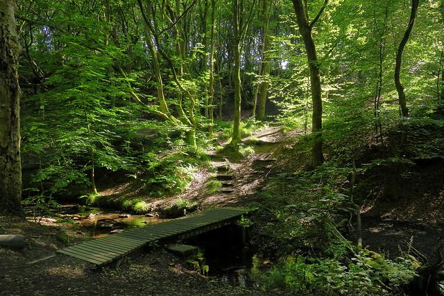 woodland landscape, Canon POWERSHOT G3 X