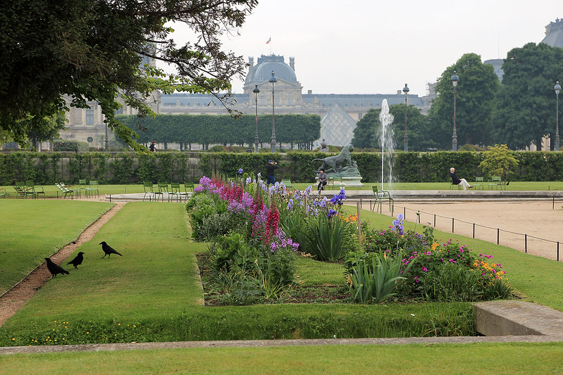 Tuileries crows