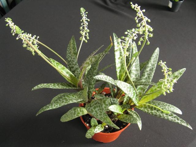 Autres plantes chez Cloo 35710704262_7cd302901a_o