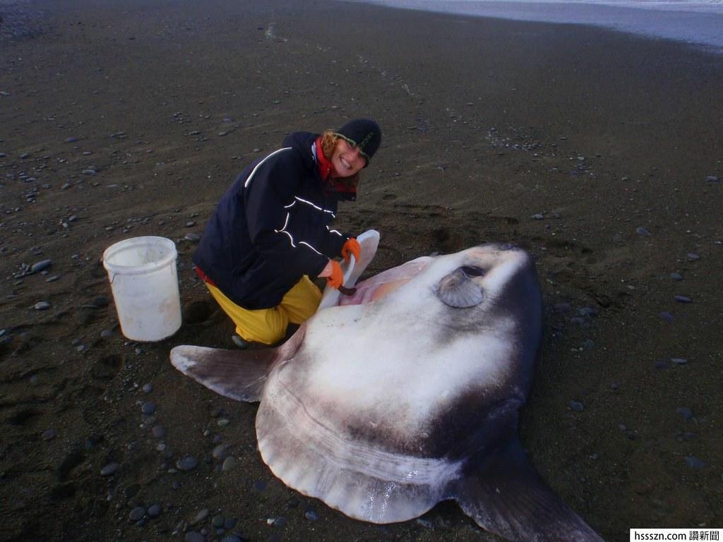 發現兩噸巨魚品種!