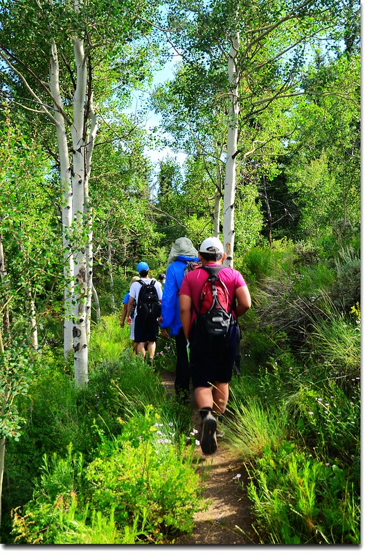 Heading into an Aspen Grove 1