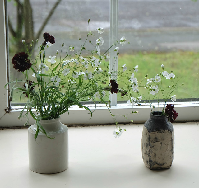 black cornflowers and gysophila