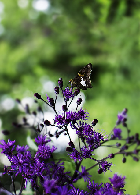 Butterfly, Canon EOS REBEL T2I, Canon EF 28mm f/1.8 USM