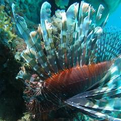 Puerto Galera Images Philippines