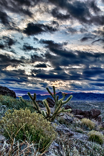 cactus arizona landscape cerbatmountains kingman sunrise cindyslater