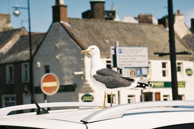 Roof Gull-y