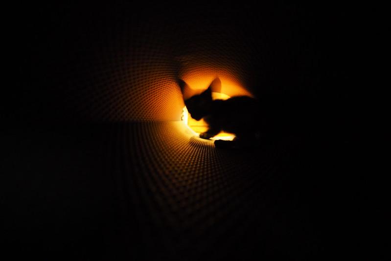隧道小王子|大ㄟ