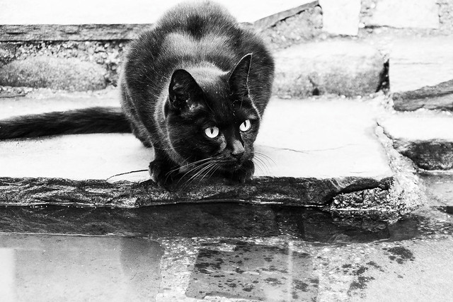 The black cat, Canon EOS 7D, Canon EF 75-300mm f/4-5.6 IS USM