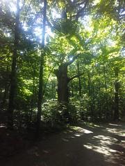 Nature Walk #2