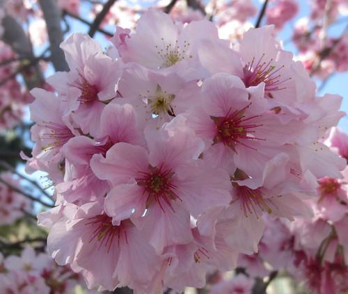 la_flowers