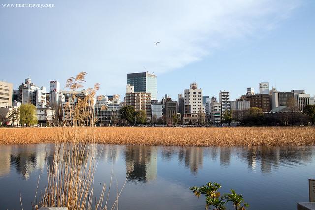 Shinobazu Pond, Ueno Park