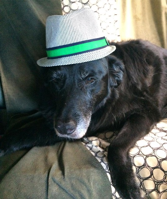 Maggie dog in a fedora.