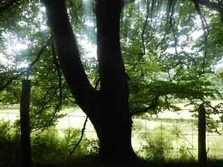 Tree, fence and light
