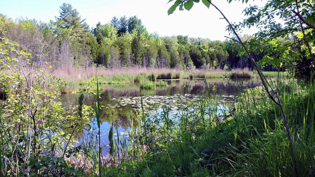 Marais de la Rivière-aux-cerises