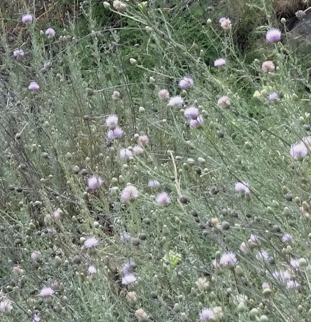 Más flores de verano