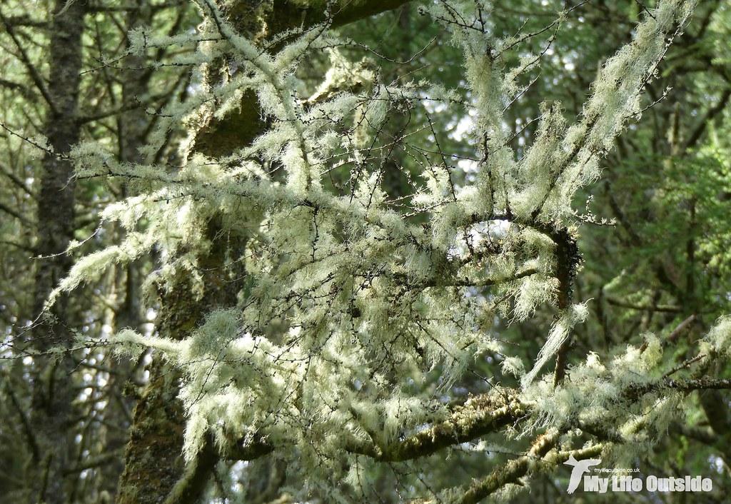 P1100061 - Lichen, Glengorm