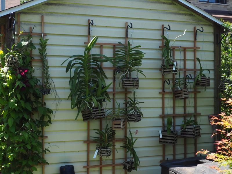 amenagement futur pour mes plantes pendant la belle saison 35494100073_8ccec215e1_o