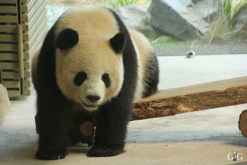 Zoo Besuch 11.07.201744