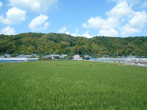 jp-Aoshima-Saitobaru (2)