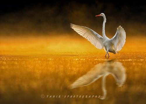 Dancing at Sunrise